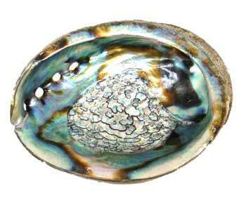 abalone shell for smudging ceremony