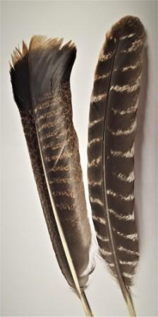 wild turkey feather for smudging - turkey smudge feather